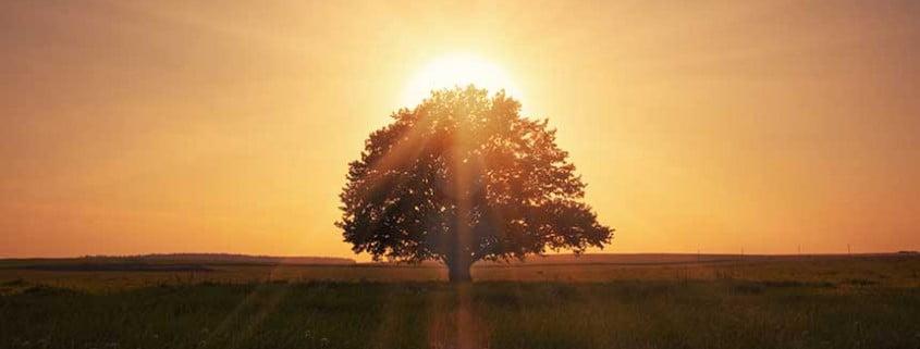 Spiritual Awakening - Life Purpose